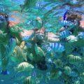 Tanjung Benoa senorkeling 1