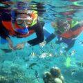 Tanjung Benoa senorkeling 3
