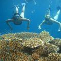 Tanjung Benoa senorkeling 6